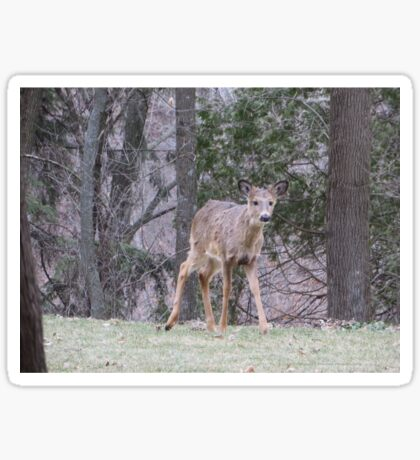 Okauchee Lake Deer Sticker