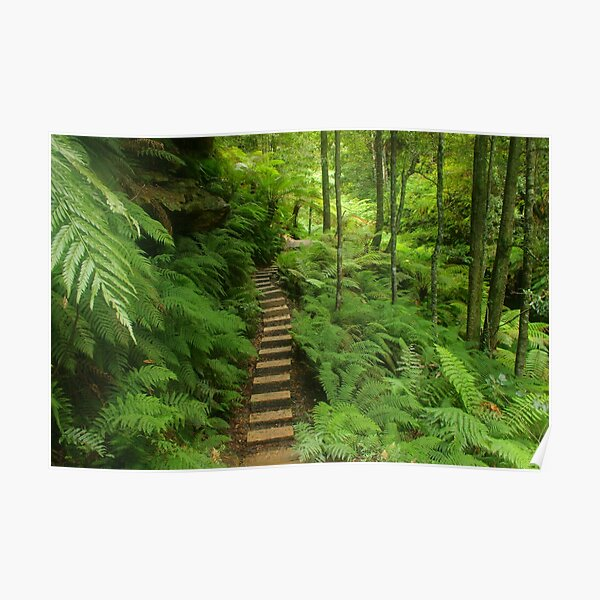Pathway of ferns Poster