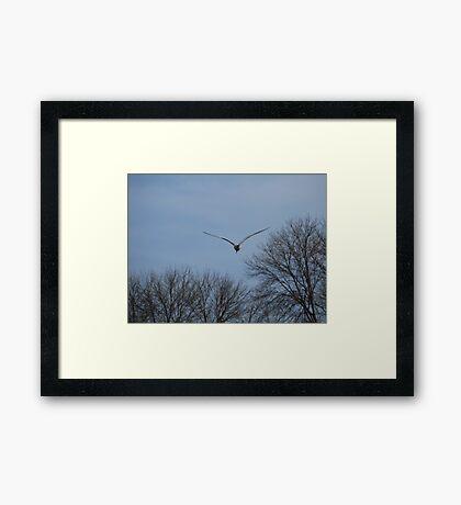 Seagull Over Trees Framed Print