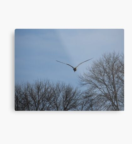Seagull Over Trees Metal Print