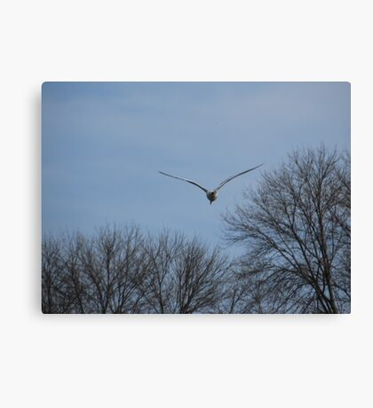 Seagull Over Trees Canvas Print