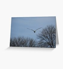 Seagull Over Trees Greeting Card