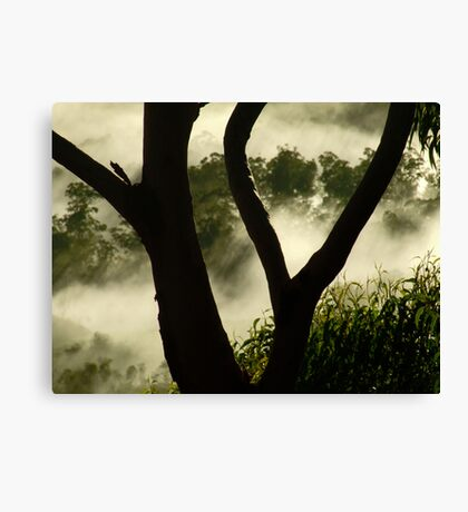 """Through the Branches"" Canvas Print"
