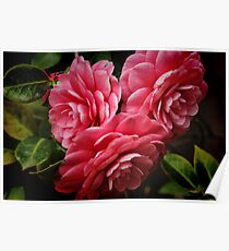 Camellias Poster
