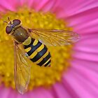 Hoverfly from above by relayer51