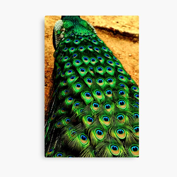 ~Of a Feather~ Canvas Print