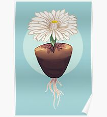The Humble & Beautiful Lithops Plant Poster