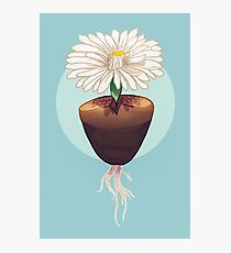 The Humble & Beautiful Lithops Plant Photographic Print
