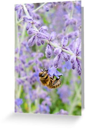 Bee mine by Jeanne Horak-Druiff