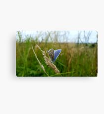 Butterfly photography Canvas Print