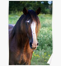 Tennessee Walker Stallion Poster