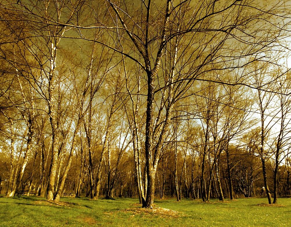 tree epics by ALEX GRICHENKO