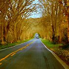 Country Road Series - 3 by ctheworld