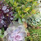 Penn State Arboretum Cactus by clizzio