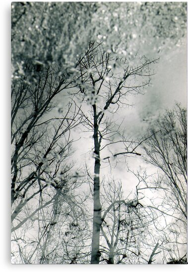 bare trees # 2 by butchart