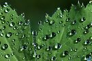 Clear Drops by AnnieSnel