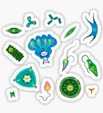 Phytoplankton Sticker