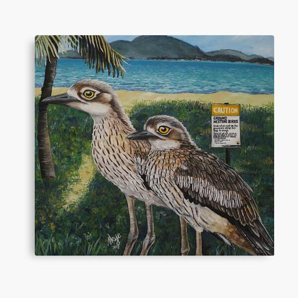 Townsvilles Curlews Canvas Print