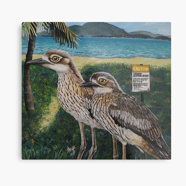 Townsvilles Curlews Metal Print