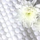 White dots & daisies by Robyn Williams