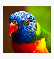Rainbow Lorikeet V Detail Photographic Print