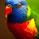 Rainbow Lorikeet V by Didi Bingham