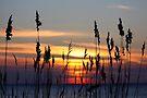 The Sun Has Set by Jo Nijenhuis