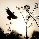 Crow in morning light by UniSoul