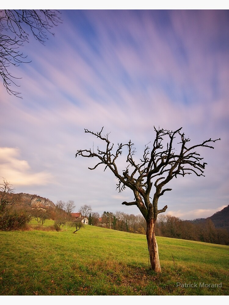 The dead tree and the clouds by patmo