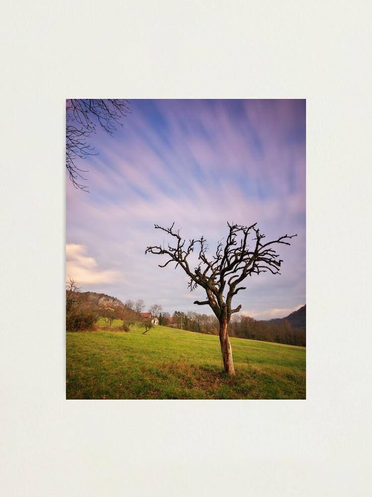 Alternate view of The dead tree and the clouds Photographic Print