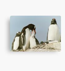 Gentoo Feeding Canvas Print