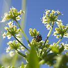 Ladybird by wildflowers