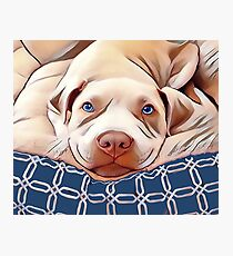 The French Bulldog  Photographic Print