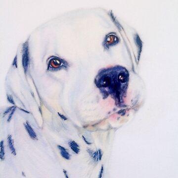 Cute dalmatian dog portrait by Julieford
