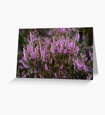 Close up of Heather flowering in the Scottish Highlands Greeting Card