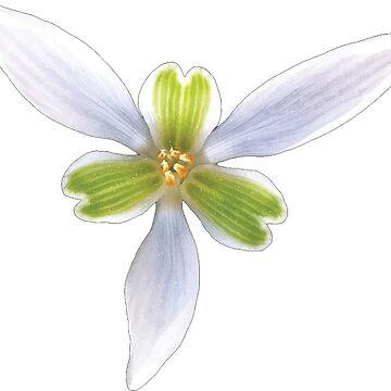 Beutiful Flower by zeke2usher