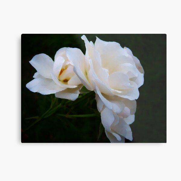 Palette White Roses Metal Print