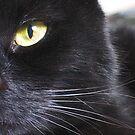 Black cat by Jeanne Horak-Druiff