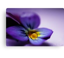 """""""Violets are blue"""" by Angelique Brunas 