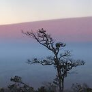 ohia tree and foggy sunrise on Mauna Loa by Lawrence Taguma