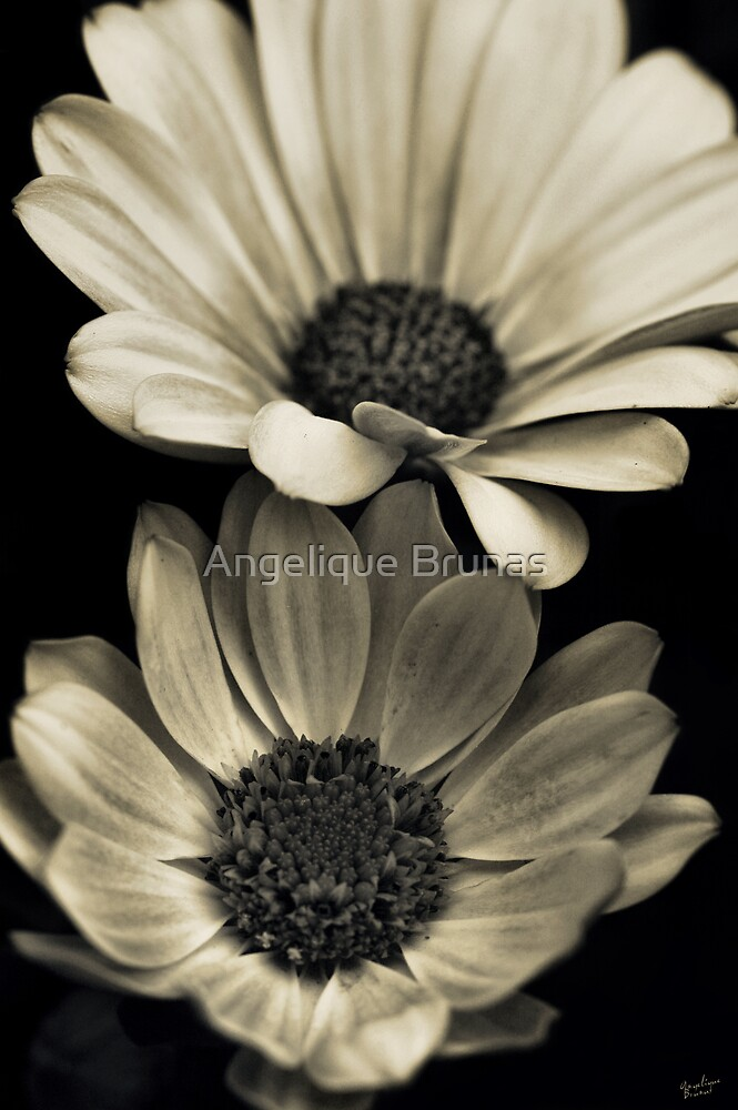 It takes 2 by Angelique Brunas