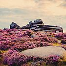 Heather at Dusk by Nicola  Pearson