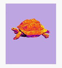 Tortoise Time Photographic Print