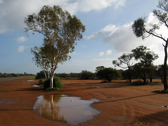 Gum Tree Drinking : Billabong Roadhouse, Western Australia by Elizabeth Sheppard