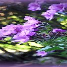 Geraniums  by cjcphotography