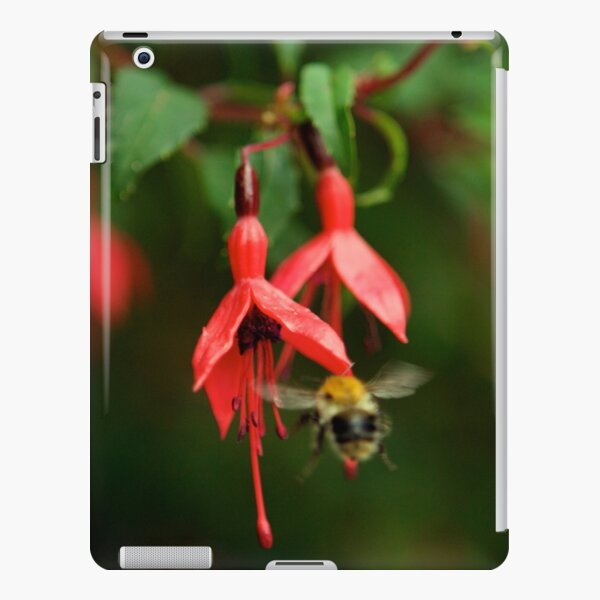 Fuchsia at Loch Na Fooey (wide) iPad Snap Case