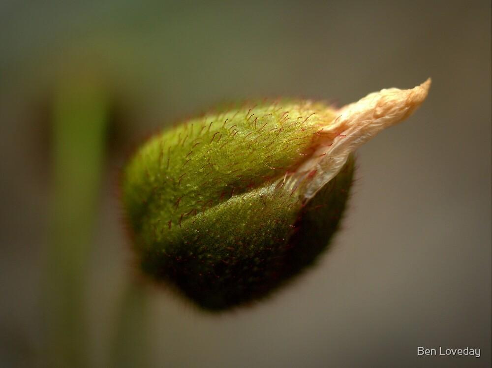 Drosera Bud by Ben Loveday