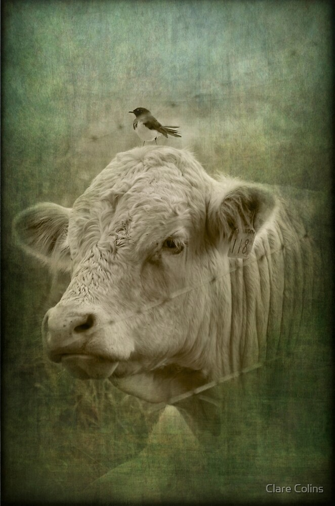 118 and his wee little mate by Clare Colins