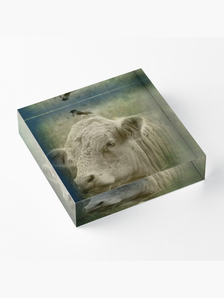 Alternate view of 118 and his wee little mate Acrylic Block
