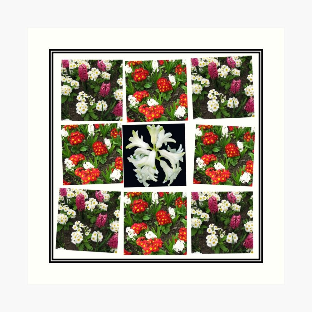 Hyacinths and Primroses Spring Collage Kunstdruck